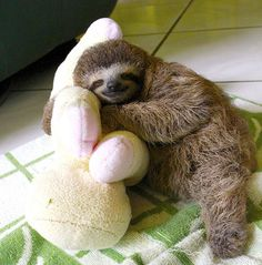 Sloth and friend