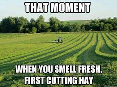 I love the smell of fresh cut hay. I'm laying here watch my dad cut hay from my bedroom window now, and laughing at him he has been going all day long and won't stop tell he can no longer see tonight. But holy cow he has a potty mouth when shit don't go right. Lol. Its all good dad you need to come in take a shower and go to bed it will be there in the morning when you wake up.☀