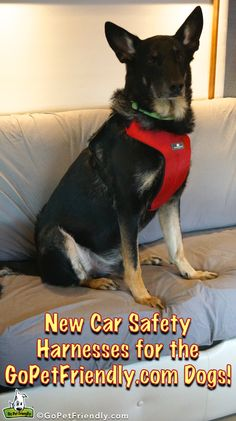 New Sleepypod Car Harnesses for the GoPetFriendly.com Dogs
