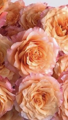 Rose Wedding Bouquet, Diy Bouquet, Wedding Flowers, Amazing Flowers, Beautiful Roses, Beautiful Flowers, Ecuadorian Roses, Bulk Roses, Rose Delivery