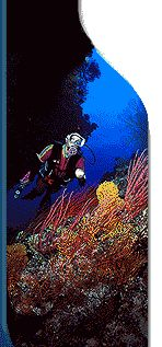 Scuba dive the Great Barrier Reef - I've snorkled it - but want to scuba.