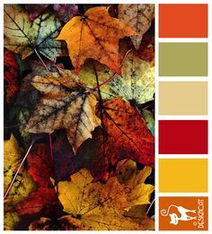Autumn Leaves - Orange, Beige, Sand, Berry, Red, Golden Yellow, Terracotta - Designcat Colour Inspiration Board