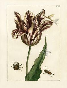 Nederlandsch Bloemwerk Botanical Prints 1794 1064 x 1400