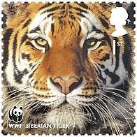 2011 Siberian tiger - © Royal Mail- In the 1930s, the mighty Siberian tiger – also known as the Amur tiger – was on the brink of extinction, with just 30 roaming the Russian far east and north-east China. Thanks to vigorous conservation work, the population increased to around 450. Even so, recent estimates show that numbers have fallen in the past few years, so our vigilance is vital. Poaching, logging and infrastructure development are largely to blame for the decline.