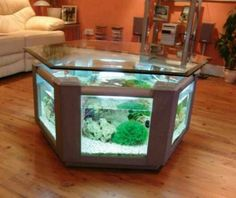 Lindo aquario como mesa de centro.