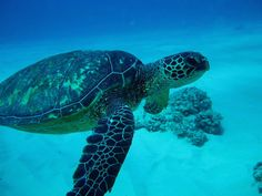 hawaii-scuba-diving-turtles-02.jpg