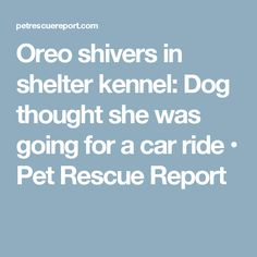 Oreo shivers in shelter kennel: Dog thought she was going for a car ride • Pet Rescue Report