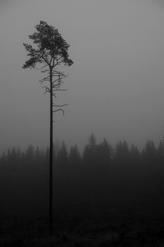 individual Lost In Life, Dark Landscape, Black And White Tree, Iphone 7 Wallpapers, Instagram Music, Tree Forest, Amazing Flowers, Dark Art, Mists