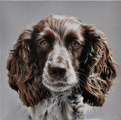 TWIGLET - Portrait of Cocker Spaniel head. 50 Oil & Acrylic commissioned portrait SOLD Limited Edition Prints available Watercolor Paintings Of Animals, Animal Paintings, Animal Drawings, Disney Princess Paintings, Cocker Spaniel, Springer Spaniel, Dog Artwork, Oil Pastel Art, Wildlife Art