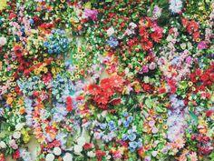 Die 7 besten Zimmerpflanzen für deine Gesundheit