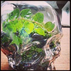 Crystal Head Vodka Skull Terrarium.