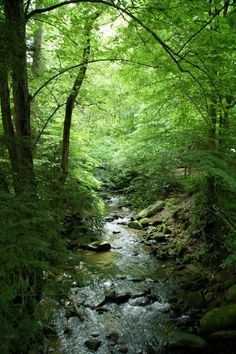 Beautiful stream in the woods - Moving water is one of my favorite things.  The sound, the feel of it flowing over your feet....the beautiful rocks that are smooth from the constant flow....the sounds of the forest around you.  Rivers & steams are among my favorite things.
