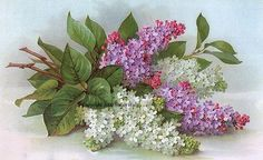 PRINT FREE SHIP French Lilacs on Parade by VictorianRosePrints