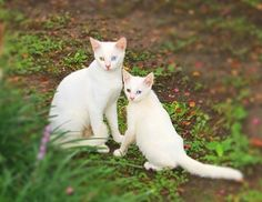 And I shall call you. mini-me. Pictures of adorable dogs and cats hanging out with their beloved mini-me's. Little Kittens, Baby Cats, Cats And Kittens, Baby Animals Pictures, Cute Baby Animals, Beautiful Cats, Animals Beautiful, Cat Club, Mother Cat