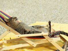 Fotografia, carta da parati gatto prendere il sole