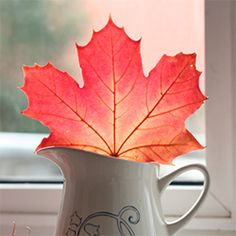 Preserve your collection of autumn leaves by dipping them in bees wax, the colour remains i and your house is filled with a lovely smell