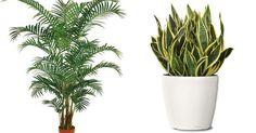 Algunas plantas que nos ayudan a purificar el aire de nuestro hogar. ¿Quieres saber cuáles son?