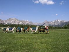 Going deep into the mountains is always an adventure but not an unusual occurrence in the state of Wyoming. However, when you throw llamas into the mix, you end up with a very unique situation. To take your mountain experience up a notch, you need to check out this unique trek through Wyoming.