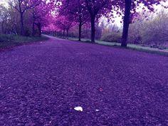Blütenweg #pickoftheweek