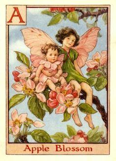 Fairy Apple Blossom Flower A (Beatrix Potter)