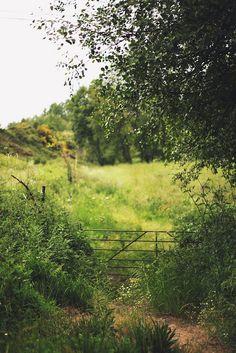 tudo por e com amor: tanto verde e tão bonito