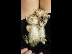 Little Tabby Fell Asleep on Another Little Tabby. Too Much Cute! - Love Meow