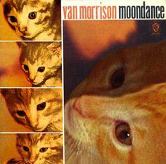 Cat Morrison (Van Morrison / Moondance)