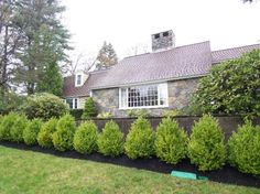 Would be great to add a little privacy along side fence. (garden ideas in front of fence) Garden Ideas In Front Of Fence, Garden Front Of House, Diy Garden Fence, Garden Shrubs, Privacy Fence Landscaping, Landscaping Plants, Landscaping Ideas, House Landscape, Garden Landscape Design
