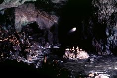 The largest sea cave in the world.  The Sea Lion Caves on the Oregon Coast is a must-see if you are driving highway 101 on the coast.  More sea lions in one place that you can imagine (or, frankly, smell).