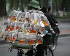 """fishes for sale....."""""""