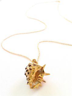 RockaBella Jewels — Gold Dipped real Drupe Shell Necklace