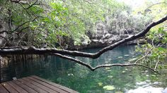 Close your eyes and take a moment to relax in the nature of Xenote Há.  #Nature  #Xenotes  #PuertoMorelos