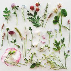 .@pulijuli | • botany •
