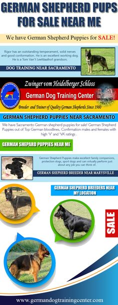 Our Website: http://germandogtrainingcenter.com/schutzhund-training-commands/ for more information on German Shepherd Pups For Sale Near Me.