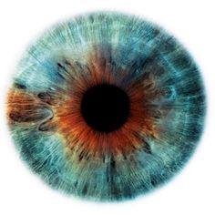 eye iris pupil