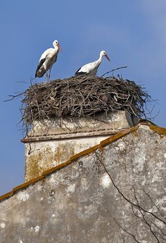 Storks in Alentejo, Portugal.