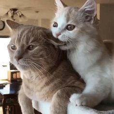Прикольных котов пост - ЯПлакалъ