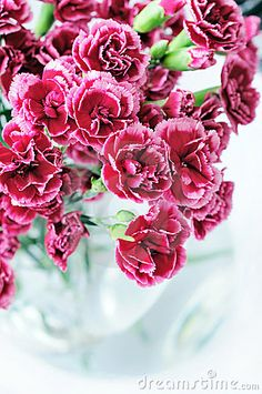 Carnation Bouquet In Vase Royalty Free Stock Photography - Image: 6278157