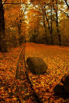 bluepueblo: Autumn Forest, Montreal, Canada photo via barbara Quebec Montreal, Autumn Scenes, Autumn Aesthetic, Autumn Forest, All Nature, Amazing Nature, Seasons Of The Year, Autumn Photography, Fall Pictures