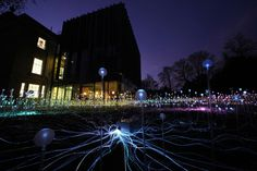 5 000 fleurs envahissent les sols d'un musée