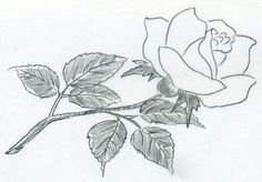rose als bleistiftzeichnung