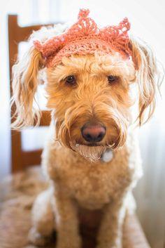 dog, crochet
