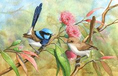 Category: Prints, Vendor: Rhonda's Art. The Superb Blue Wren is known as a fairy wren, a tiny energetic bird nesting in low bushes. The female and young ones. Pretty Birds, Beautiful Birds, Animals Beautiful, Botanical Drawings, Botanical Illustration, Love Birds Quotes, Bird Pencil Drawing, South African Birds, Bird Gif