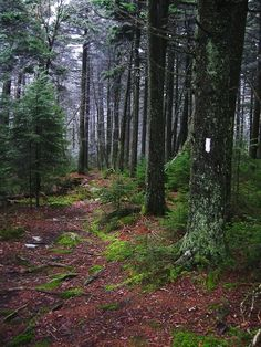appalachian trail vermont Backpacking – Famous Last Words Hiking Usa, Thru Hiking, Hiking Trails, Appalachian Trail Map, Trail Maps, Forever Travel, Trail Guide, Pacific Crest Trail, Photos Voyages