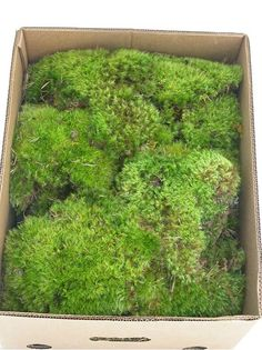 Green/Clump Moss (Small~6x6x8 box))