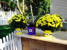 Wanted to make an outdoor Minion birthday party for my daughter. So I'm using our plants as props to decorate the yard. :) #minions - Despicable Me Theme DIY
