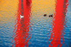 DSC_1249 by plaphotypus, via Flickr Flemington Bridge Melbourne Victoria Australia