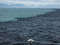 Boundary between coastal waters influenced by glacial weathering and offshore waters of the Gulf of Alaska