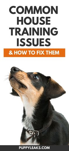 Dog Behavior Are you having problems potty training your dog? Here's 5 common house training issues and how to fix them. From preventing your dog from having an accident while you're at work to teaching your dog how to ask when they need to go outside.