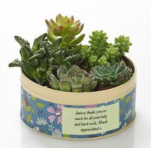 Florals abound in this perfectly unique gift tin which you can personalise for free! Myriad blossoms adorn the tin while inside, five delicious succulents stand to attention, ready for discovery.